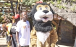 Simba the lion at HIFA