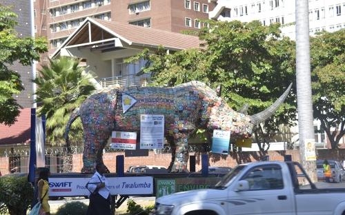 Twalumba the rhino visits Harare