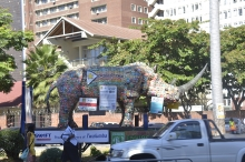 Twalumba the rhino visits Harare